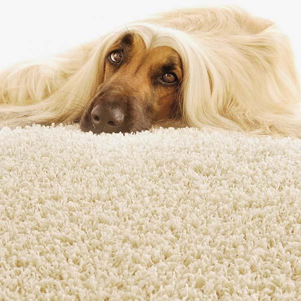 Bodenlegen Teppich