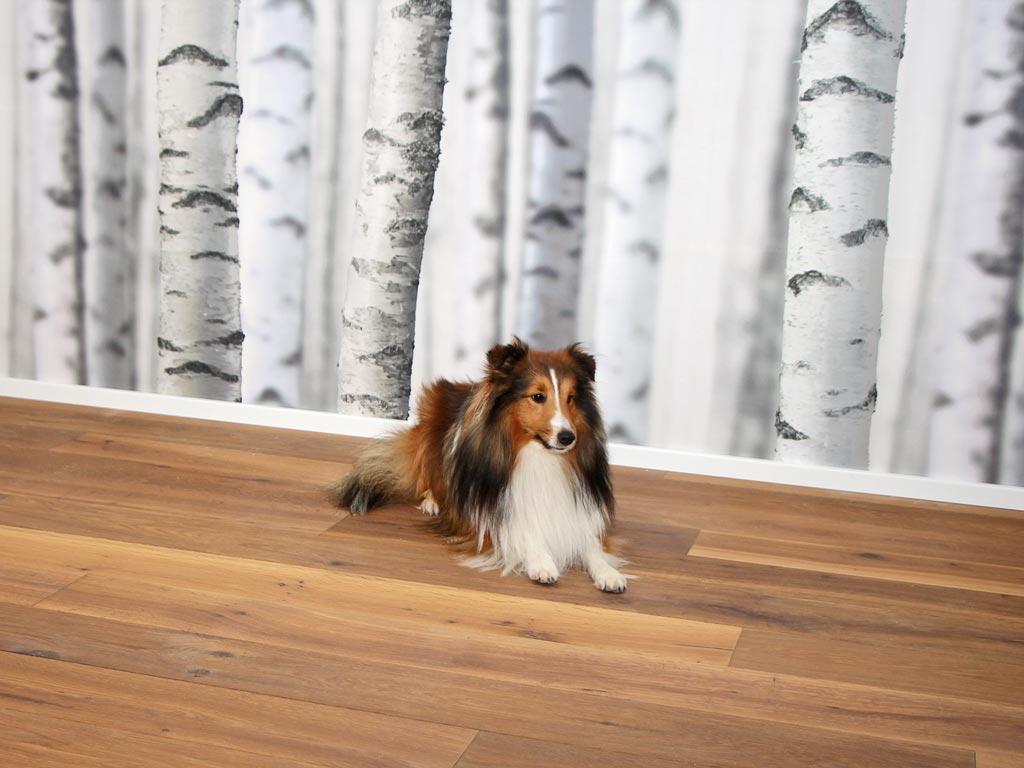 Birkentapete Hund Parkettboden Ebmatingen Chris Stettler