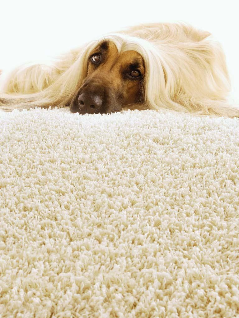 Muster Belcolor Teppich mit Hund Chris Stettler Bodenleger Volketswil
